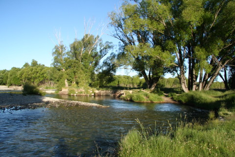 Twizel riverbank