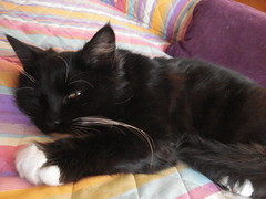 Meet Noel..... (polly :)) Tags: homeless kitty noel surprise xmaspresent