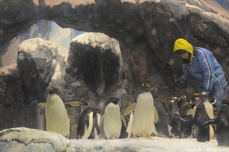 海生館企鵝餵食 (4).jpg