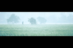 All days come from one day (AquariusVII) Tags: green oxygen crop malaysia cinematography tj terengganu anamorphic twp d80 cropted aquariusvii terengganuweddingphotographer photophobiaz tjlens tjlenspicture d80afsdxnikkor55300mmf4556gedvr