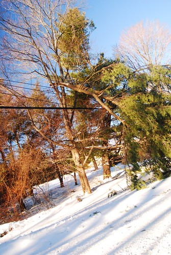 Branch Down On Wires