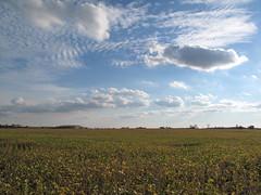 Edon farmland (birchloki) Tags: light ohio sky cloud clouds rural farm farmland crop farms crops soy soybean soya soybeans cropland edon edonohio