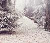 {  My Winter } (B@rbar@ (Barbara Palmisano)) Tags: wood winter italy white cold tree gelo foglie alberi season blog leaf nikon frost italia brina natura foglia 60mm nikkor leafs inverno bianco freddo legno stagione natureplus httpbarbaraphotographyblogspotcom201101mywinterhtml