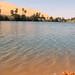 Oasis in the Libyan Sahara