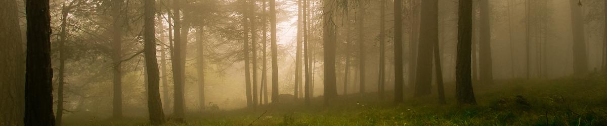 Nei boschi di Emarèse