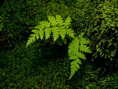 Fern (cotarr) Tags: green illinois flash olympus geotag garfieldparkconservatory ep2 arlingtonheights cameraraw 17mm cs5 manualgeotag topazdenoise topazdetail cupdiffuser