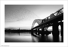 Dusk at Runcorn Bridge (Ian Bramham) Tags: bridge nikon dusk bridges roosting starlings runcorn flocks d700 ianbramham 1635vr