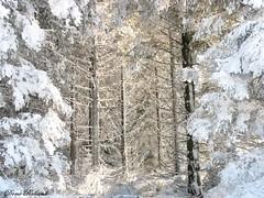 La forêt (Domi Rolland ) Tags: france nature europe lumière postcard neige blanc froid forêt hivers bouloc neigebouloc