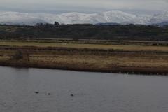 Maltreath (AngelaG1) Tags: water birds wildlife angleseywales maltreath