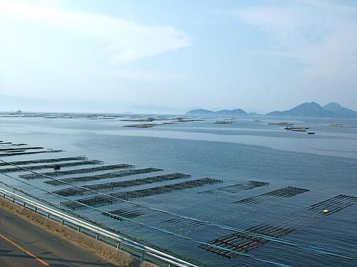 広島 牡蠣 画像6