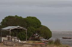 La soledad de los pescadores | 110116-9726-jikatu (jikatu) Tags: lake tree canon arbol uruguay fisherman laguna polarizer 135mm baot maldonado joseignacio canon5dmkii jikatu baikovicius