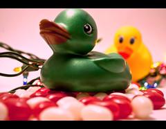 rubber ducks (Devil with a son) Tags: life christmas camera canada newfoundland lights diy photo beans still nikon day dof sweet bokeh flash sb600 ducks stjohns off rubber jelly 365 lightbox project365 d3000 koryjohnston