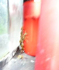 Wasps Meeting in a Grave Lantern - Grablaterne, Zentralfriedhof Wien Simmering,Tor1, alte jüdische Abteilung (hedbavny) Tags: vienna wien original autumn winter red summer friedhof blur green rot art glass cemetery graveyard studio insect rouge austria sketch österreich spring wasp sommer kunst diary herbst jahreszeit kerze sketchbook september note lantern grün melancholy laterne rosso tagebuch glas frühling atelier simmering wespe werkstatt skizze notiz arbeitsraum obdachlos adom jüdischerfriedhof skizzenbuch maigrün vertrieben grablaterne zenntralfriedhof hedbavny notquartier ingridhedbavny candheimatlos unterstandslos