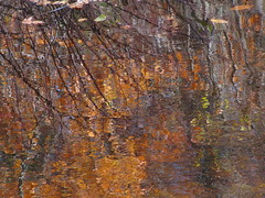 fall reflections (katieforeman2010) Tags: abstract color fall water leaves seasons expressionism refelction