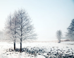 Just a perfect day (~ Maria ~) Tags: trees winter white mist snow cold nature fog landscape view bright sweden