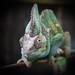 Cool Reptilian