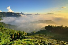 Tea farm at Mountain Dalun (Vincent_Ting) Tags:   teafield  sunset  seaofclouds  fog misty tea    taiwan   clouds tree sky   vincentting   startrails