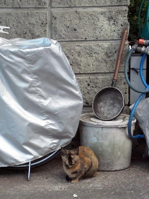 Today's Cat@2010-11-27