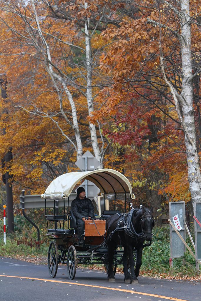 the covered wagon goes in colored leaves