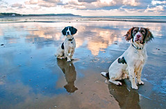 Beach Dogs. (IMAGES FROM MAN.) Tags: blue sea sky colour beach nature water clouds reflections landscape coast seaside nikon raw