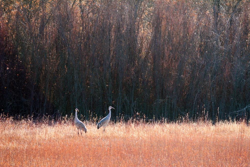 Serene Cranes