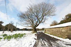Desnudo v2.0 (yorugua) Tags: winter españa snow tree naked arbol spain raw nieve galicia invierno postal sobrado desnudo couso