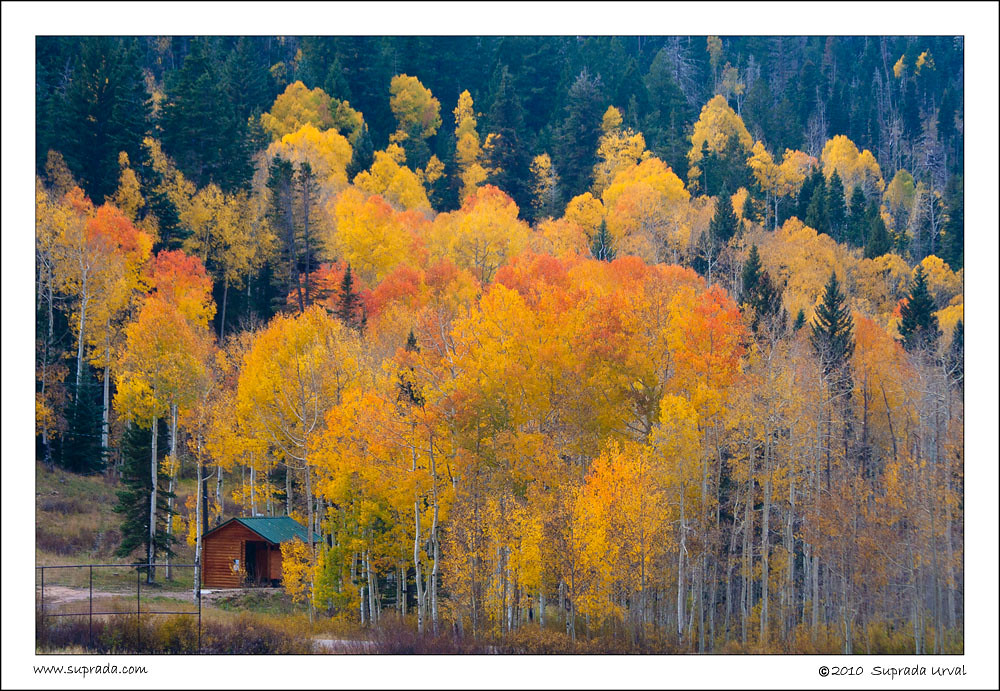 Aspen and Outhouse