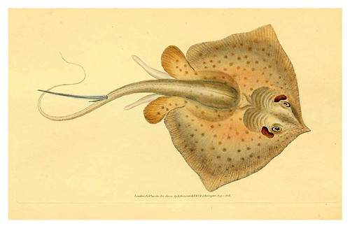 017-The natural history of British fishes 1802-Edward Donovan