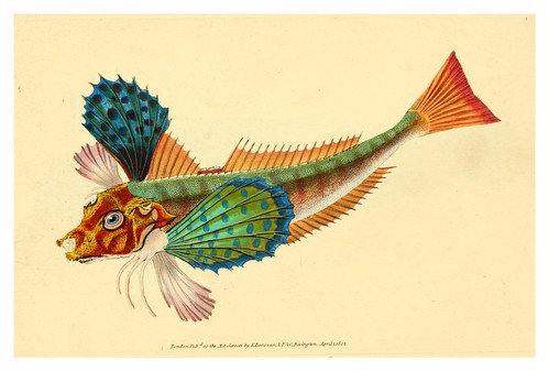 001-The natural history of British fishes 1802-Edward Donovan