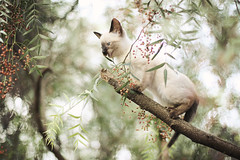 kitty in distress (AnnuskA  - AnnA Theodora) Tags: light tree colors beautiful danger cat bokeh kitty poorthing savealifeadoptanabandonedshelteredanimal adoptionisbetter