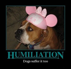 Humiliation (d h-j) Tags: dog pet hat mouse cap mickeymouse demotivator demotivate humiliation humiliate minniemouseminie
