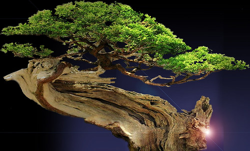 """Bonsai011 • <a style=""""font-size:0.8em;"""" href=""""http://www.flickr.com/photos/30735181@N00/5261953038/"""" target=""""_blank"""">View on Flickr</a>"""
