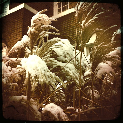 snowy tall grass