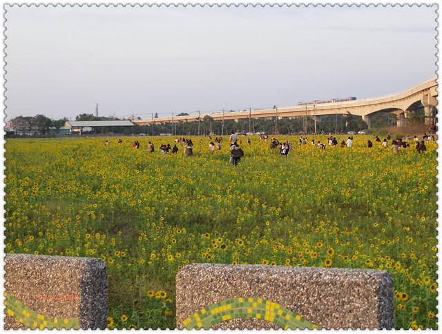 353篇 青埔站向日葵花田 2010光陰地圖