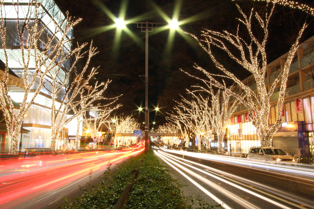 Omotesando Illuminations 2010 (3)