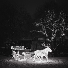 Reindeer (boscoppa) Tags: park christmas uk england bw snow 120 6x6 film night zeiss reindeer lights sleigh ikon ilford fp4 sunderland mowbray nettar