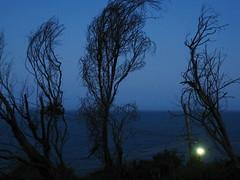 IMG_2253to (MargaretDonald) Tags: dead streetlight lightpoles palmbeach electricitylines wattles 525of2010 themenightstreet