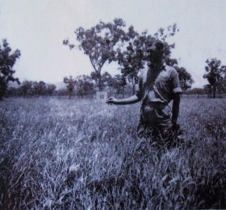1943 Crops at Carlton Reach Research Station