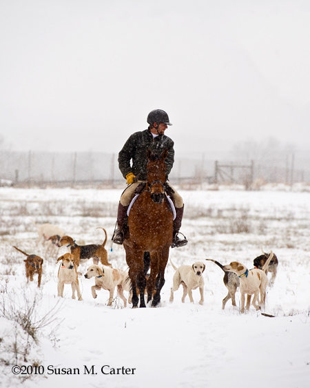 Foxhunting in the snow. horse, rider, hounds. Bull Run Hunt