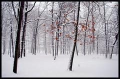 White Christmas. (BamaWester) Tags: trees mist snow leaves fog forest huntsville alabama montesano bamawester napg
