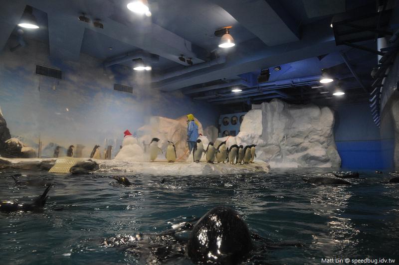 海生館企鵝餵食 (1).jpg