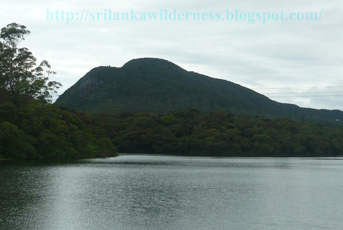 Kande Ela Lake, Horton Planes, Sri Lanka