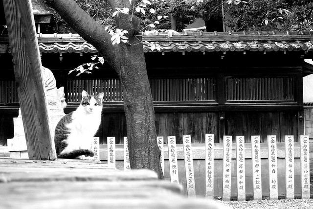 Today's Cat@2010-12-29