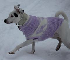 hellfliederpulli2 (mo.ho) Tags: von babydogs hundepullover