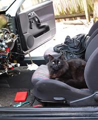 "My ""Helper"" (Boneil Photography) Tags: pet vw cat canon golf 1996 powershot mainecoon gti kelso g11 8v 20l heatercore boneilphotography brendanoneil"