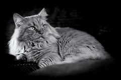 0148_flickr.jpg (mac.chia) Tags: santiago felini gatti animali