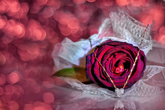 Rose for you (grazanna) Tags: rose heart bokeh rosa explore frontpage cuore canon50mm ra serce supershot