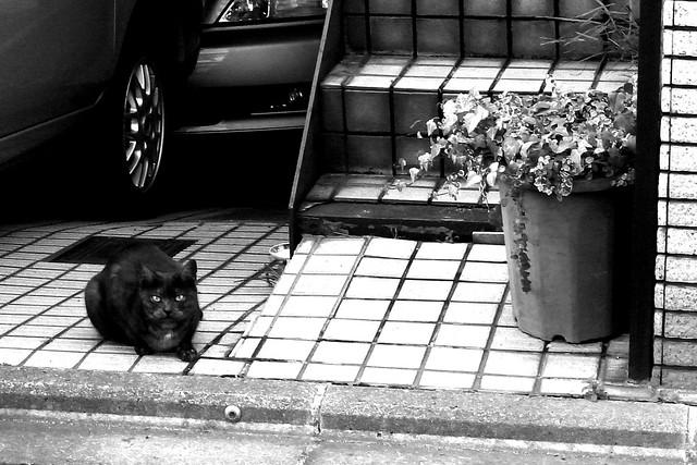 Today's Cat@2010-01-06
