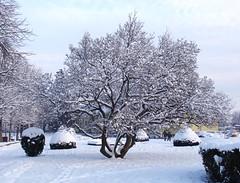 Snow in Ribeauvillé