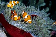 Bali diving Dive Concepts_037